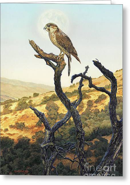 Falcon In The Sunset Greeting Card by Stu Shepherd