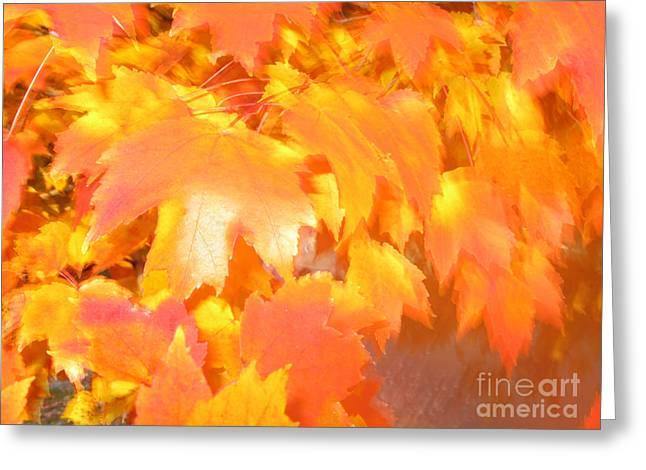 Fall 1 Greeting Card by Tony Cordoza