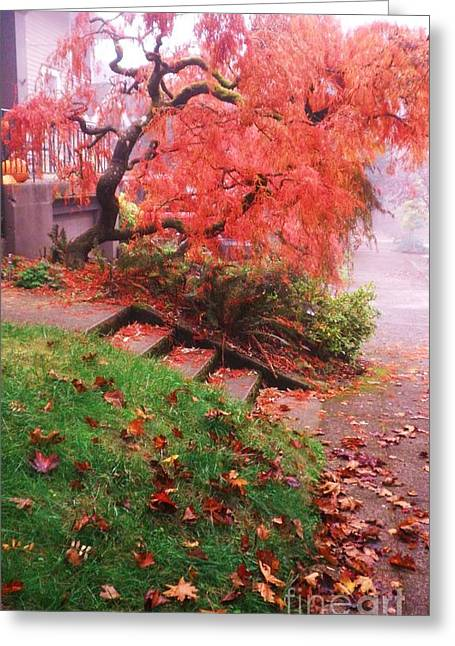 Fall And Fog Greeting Card by Suzanne McKay
