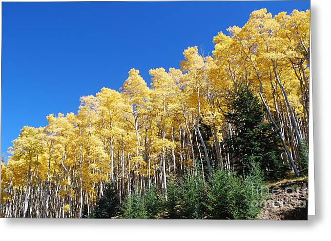 Greeting Card featuring the photograph Fall Aspens Of New Mexico by William Wyckoff
