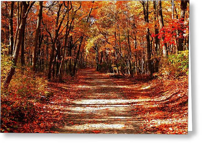 Greeting Card featuring the photograph Fall At Cheesequake by Raymond Salani III