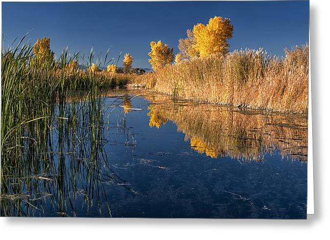 Fall At The Canal Greeting Card