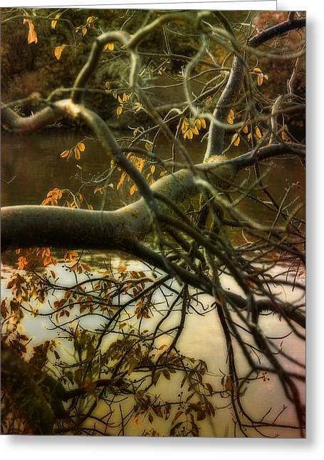 Fall At The Creek Greeting Card by Ellen Heaverlo