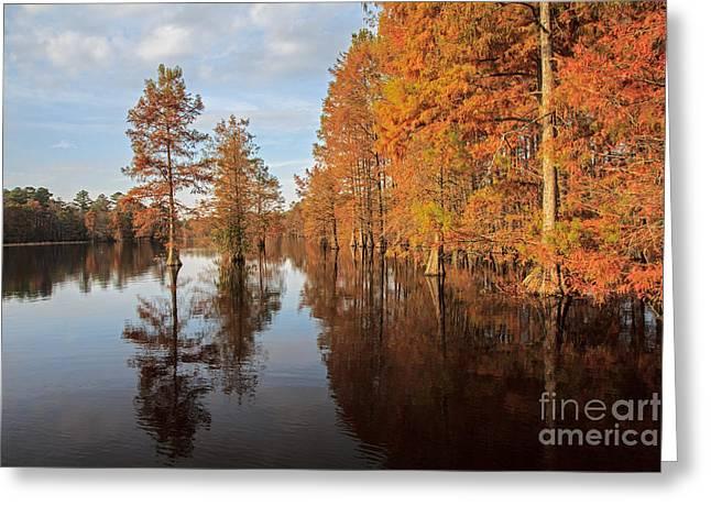 Fall At Trap Pond Greeting Card