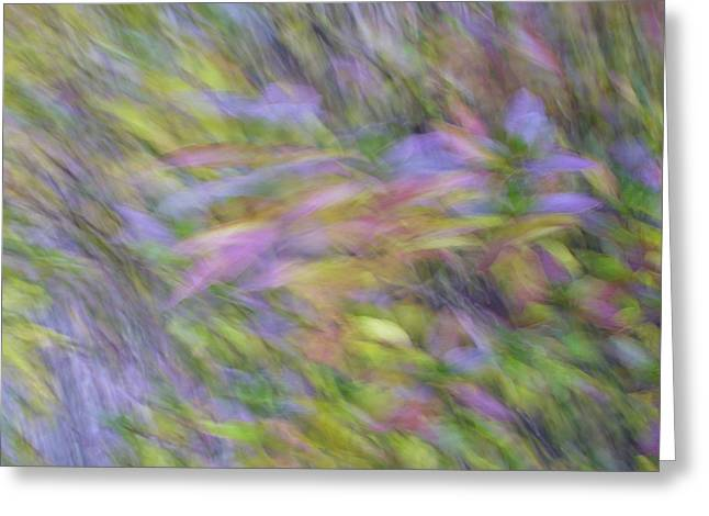 Greeting Card featuring the photograph Autumn Azaleas 1 by Bernhart Hochleitner