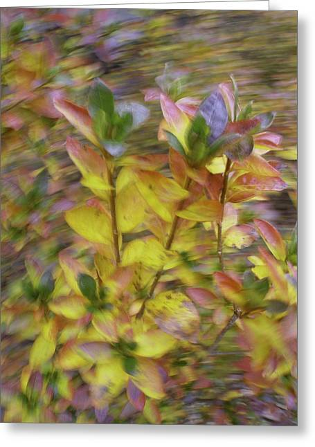 Greeting Card featuring the photograph Autumn Azaleas 3 by Bernhart Hochleitner