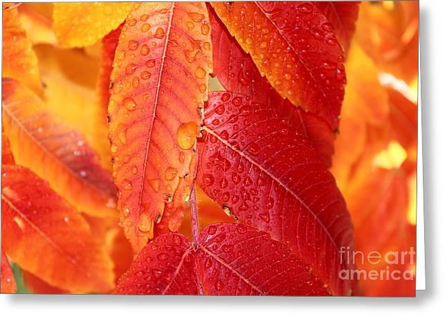Fall Beauty Greeting Card by Krissy Katsimbras