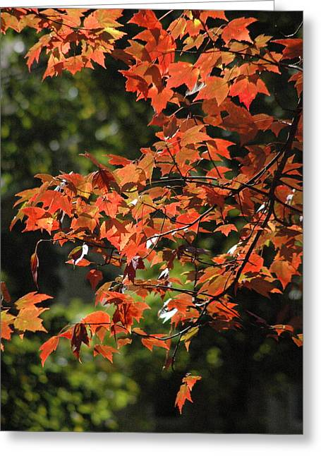 Autumn's Best Greeting Card by Les Scarborough