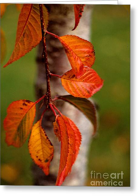 Fall Beauty Greeting Card by Sharon Elliott