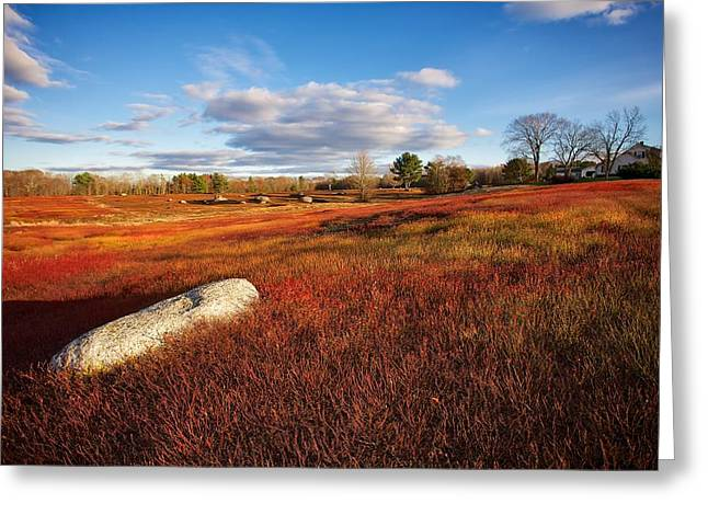 Fall Blueberry Barrens Greeting Card by Don Seymour