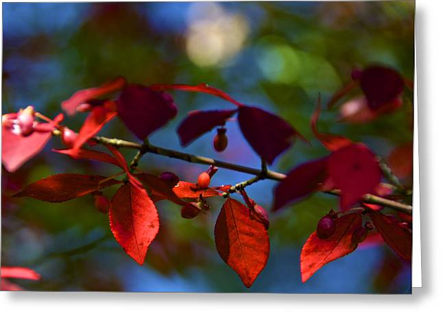 Fall Bokeh Greeting Card