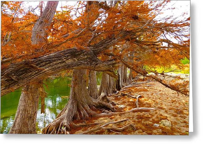 Fall Brilliance Greeting Card by David  Norman