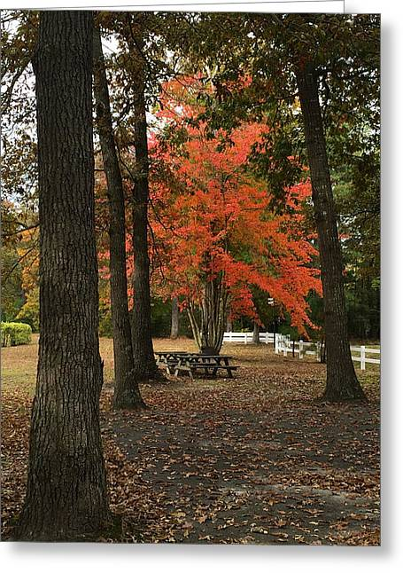 Fall Brings Changes  Greeting Card by Amazing Photographs AKA Christian Wilson
