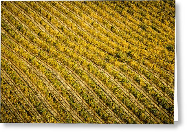 Fall Color Grape Vines Greeting Card by Connie Cooper-Edwards