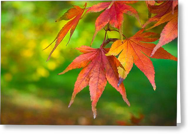 Fall Color Greeting Card by Jeff Klingler