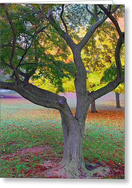 Fall Color Greeting Card by Lisa Phillips