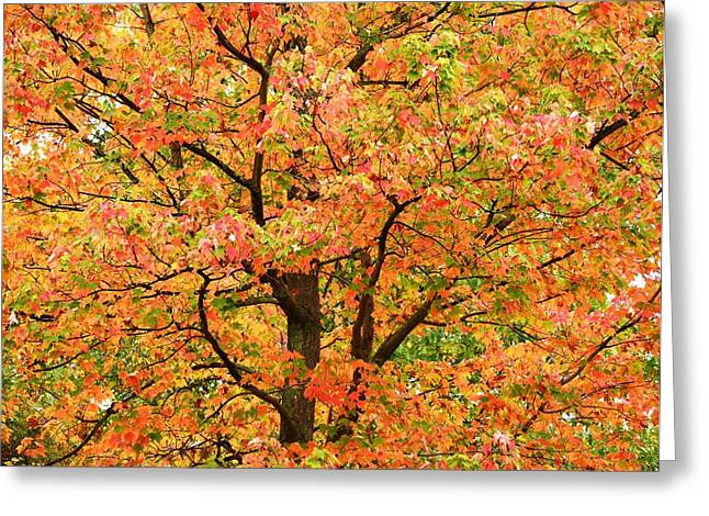 Fall Color Palette Greeting Card by Judy Genovese