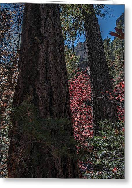 West Fork Perspective Greeting Card