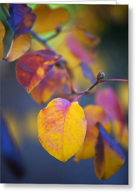 Greeting Card featuring the photograph Fall Color by Stephen Anderson