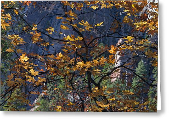 West Fork Tapestry Greeting Card
