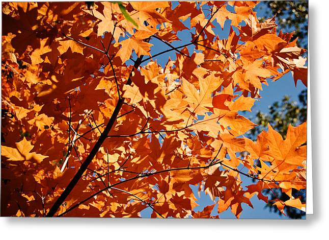 Fall Colors 2 Greeting Card