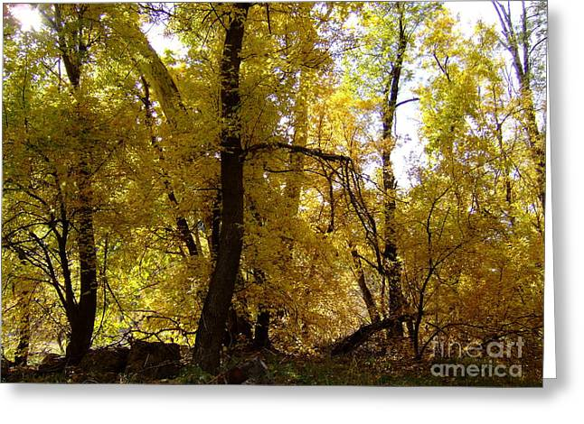 Fall Colors 6169 Greeting Card by En-Chuen Soo