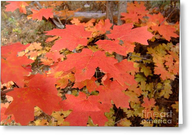 Fall Colors 6308 Greeting Card by En-Chuen Soo
