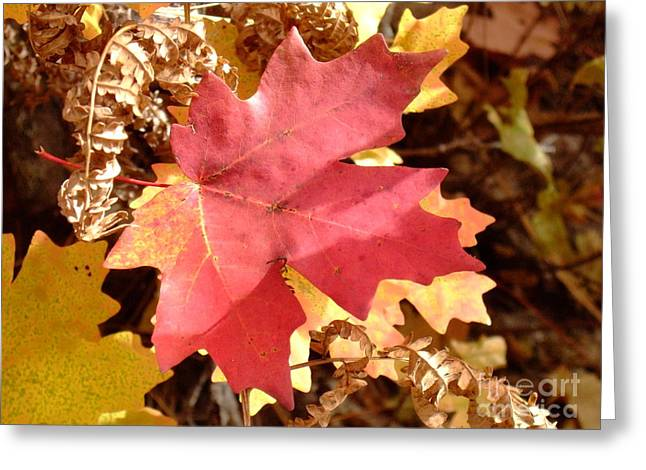 Fall Colors 6313 Greeting Card by En-Chuen Soo