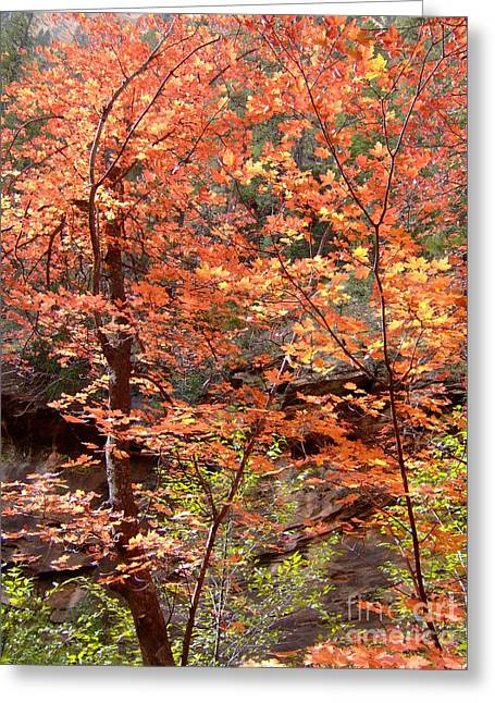 Fall Colors 6335 Greeting Card by En-Chuen Soo