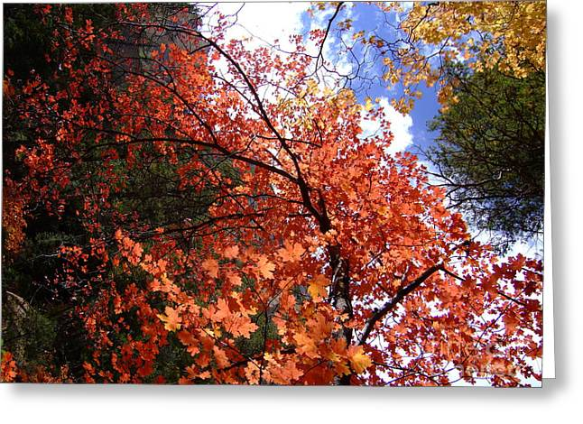 Fall Colors 6340 Greeting Card by En-Chuen Soo