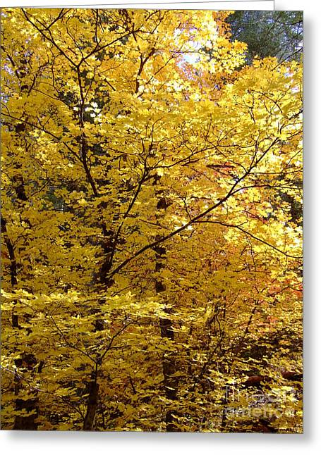 Fall Colors 6371 Greeting Card by En-Chuen Soo