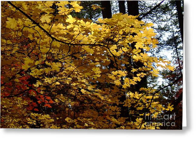 Fall Colors 6372 Greeting Card by En-Chuen Soo