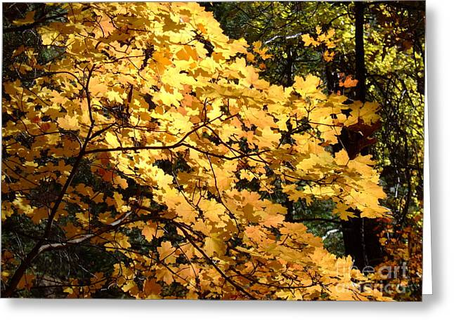 Fall Colors 6407 Greeting Card by En-Chuen Soo