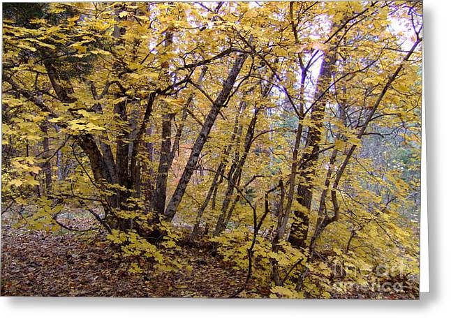 Fall Colors 6435 Greeting Card by En-Chuen Soo
