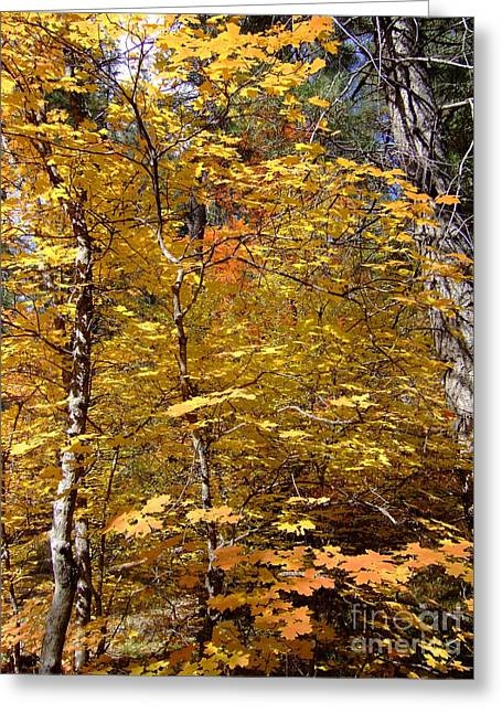Fall Colors 6446 Greeting Card by En-Chuen Soo