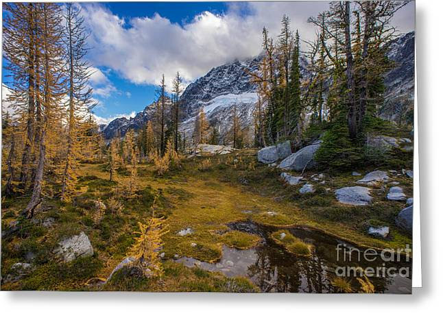 Fall Colors And Mount Stuart Greeting Card by Mike Reid