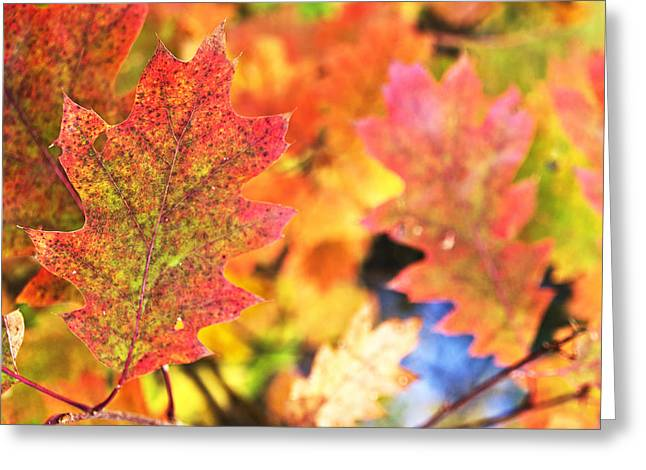 Greeting Card featuring the photograph Fall Colors by Arkady Kunysz