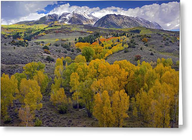 Fall Colors At Chair Mountain Colorado Greeting Card by Tim Fitzharris