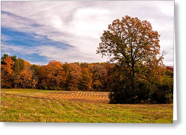 Fall Colors At Poets Walk Park Greeting Card