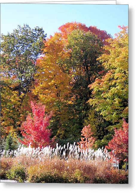 Fall Colors Greeting Card by Gaetano Salerno