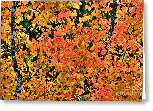 Fall Colors In Idaho Greeting Card