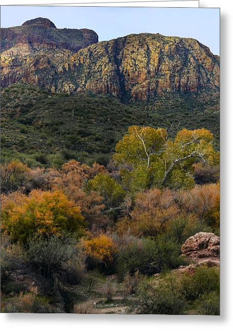 Fall Colors In The Desert Greeting Card