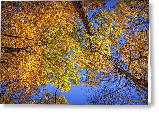 Fall Colors In The Sky  Greeting Card by LeeAnn McLaneGoetz McLaneGoetzStudioLLCcom