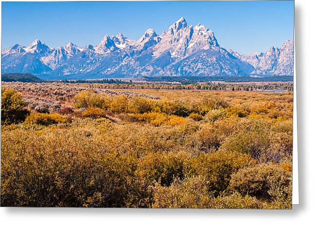 Fall Colors In The Tetons   Greeting Card by Lars Lentz