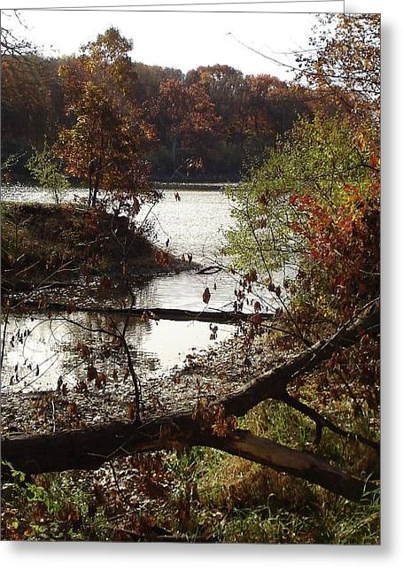 Greeting Card featuring the photograph Fall Colors by J L Zarek