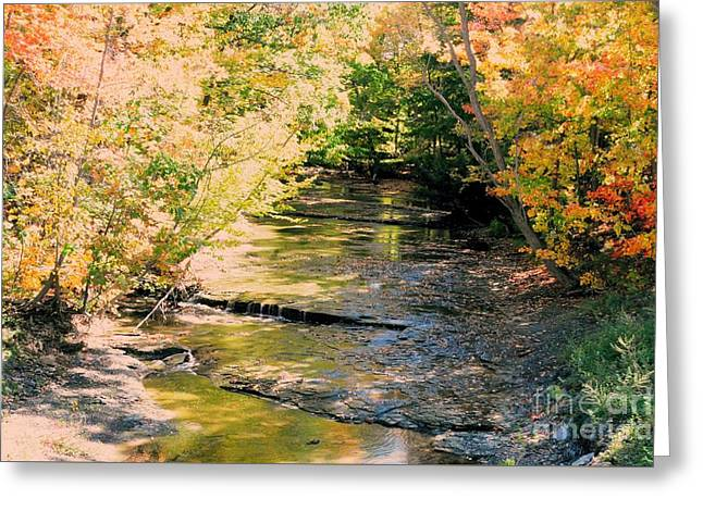Fall Colors Greeting Card by Kathleen Struckle