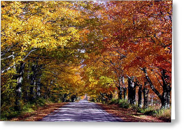 Fall Colors Near Sister Bay Greeting Card by David T  Wilkinson