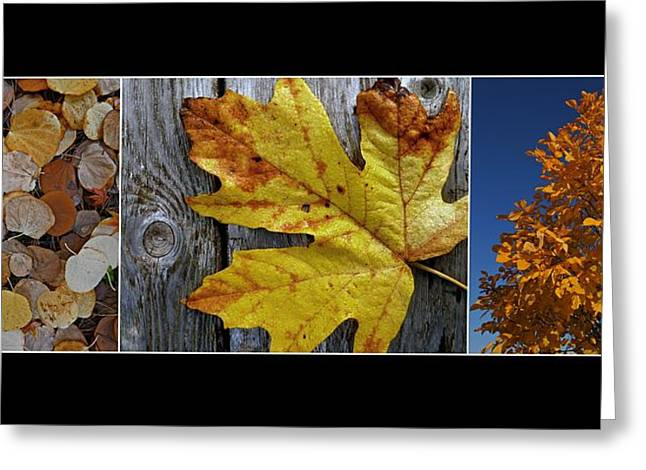 Fall Colors Triptych Greeting Card