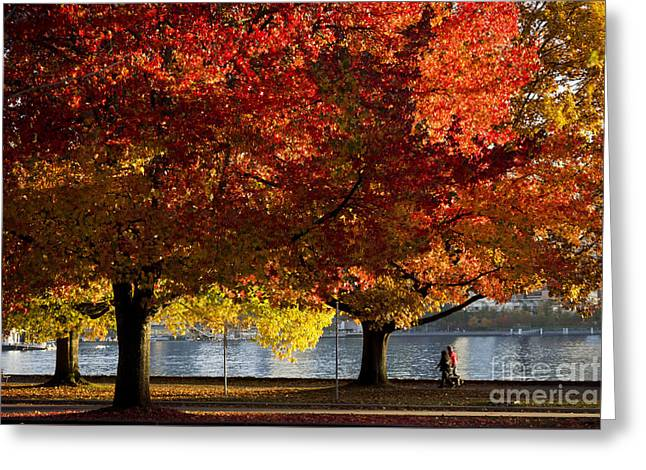 Fall Colour In Stanley Park Greeting Card