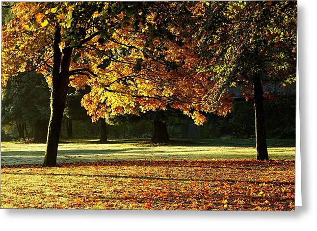 Fall Colours Greeting Card by Michele Wright